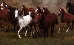 caii-salbatici-din-delta-dunarii
