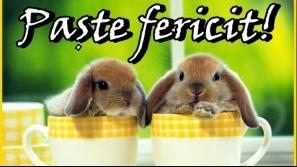 paste_fericit_42642000_78797800